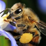 Damian-blog-about-bees-an-008